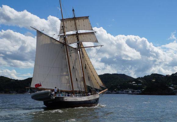 Путешествие по Новой Зеландии. Часть 2. Акклиматизация в Паихии